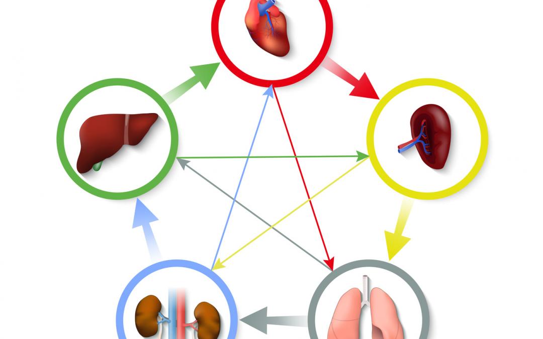 La Teoría de los Cinco Elementos y la Medicina Tradicional China