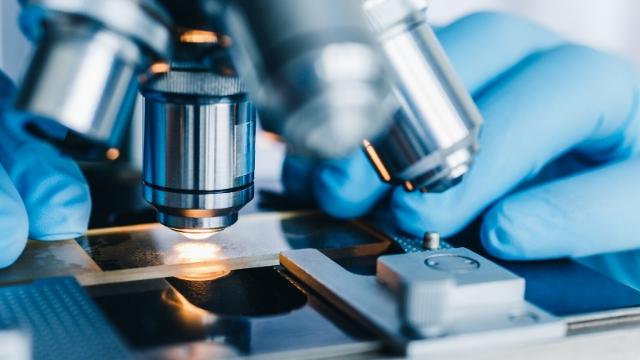 curso microscopía campo oscuro
